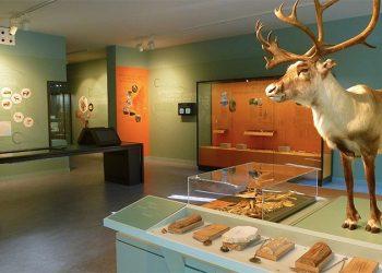 CitedelaPrehistoire-museographie-c924f81cb5